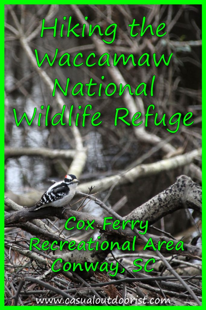 Hiking the Waccamaw National Wildlife Refuge pin