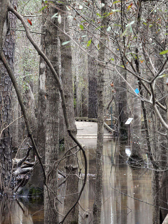 Blue trail flooded